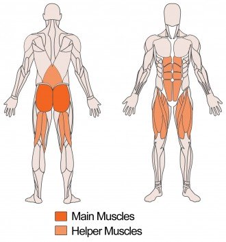 Main and Helper muscles targeted with Dumbbell Squats Exercise